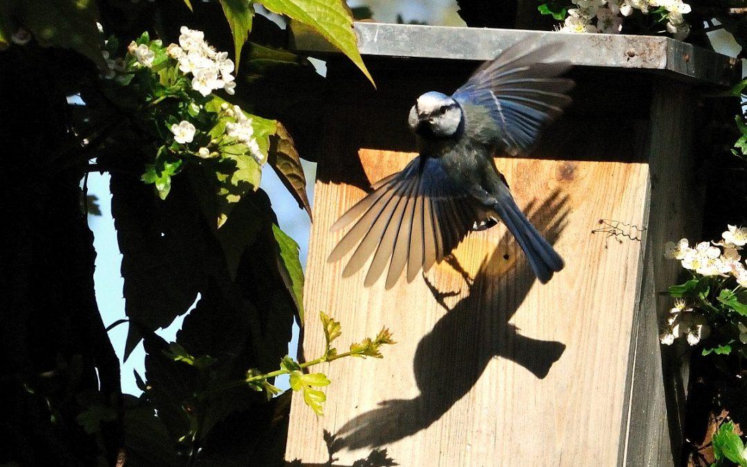 Woonruimte tekort! – ook voor vogels